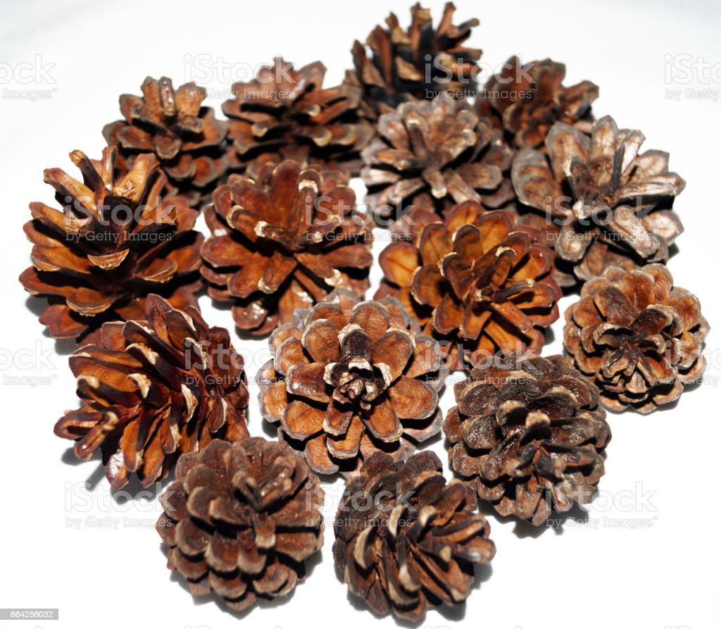 Collection of pine cones isolated on a white background royalty-free stock photo