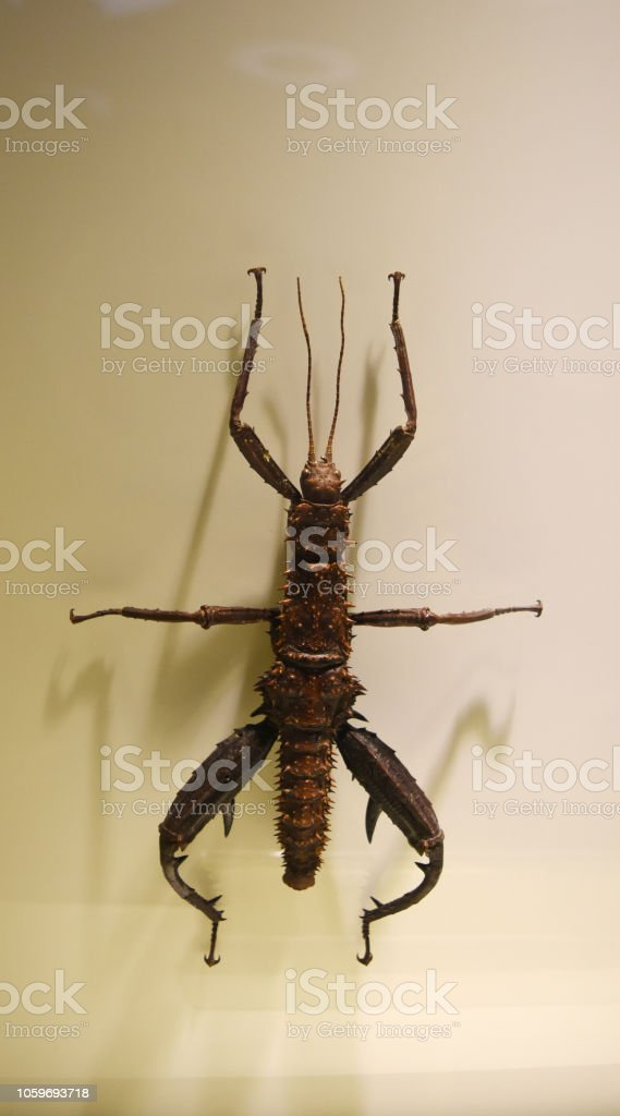 A collection of preserved insects stock photo