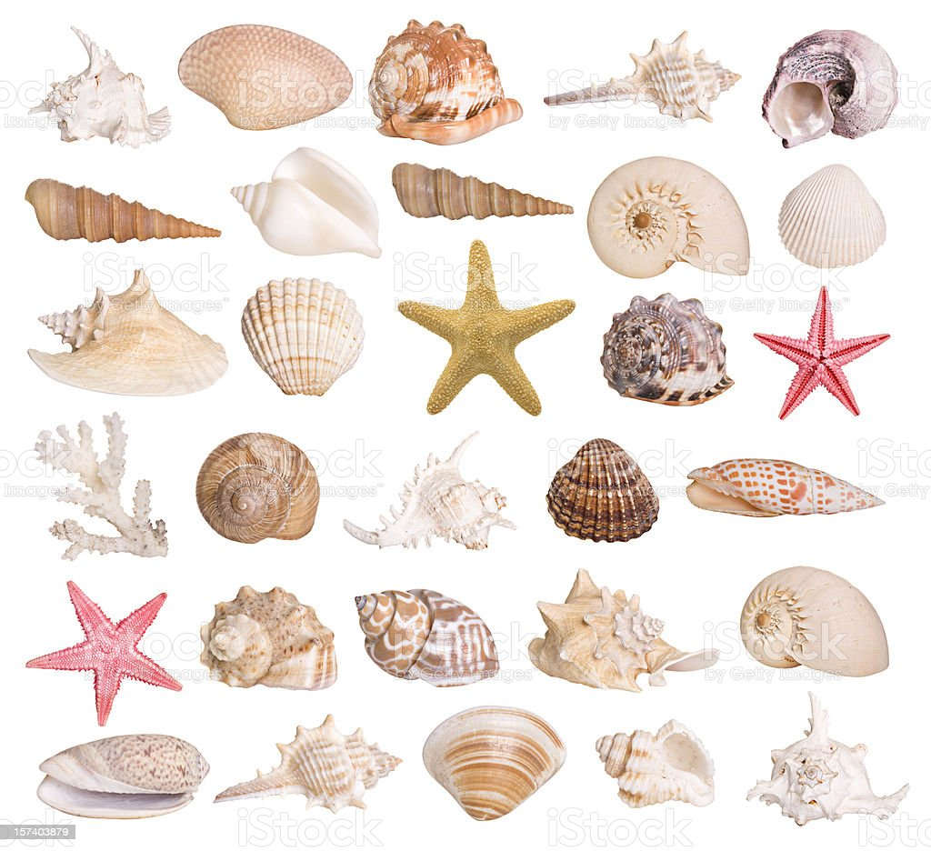 Collection of seashells stock photo