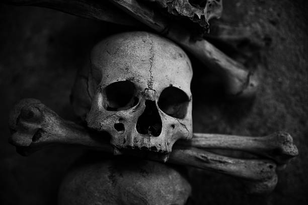 collection of skull and bones – Foto