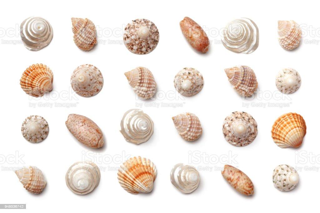 Sammlung von exotischen Muscheln isoliert auf einem weißen Hintergrund. – Foto
