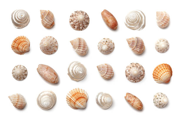 Collection of small exotic shells isolated on a white background. stock photo