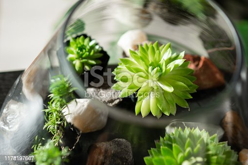 Top view. Collection of succulents in pots. Minimalistic home interior with composition of cactus and succulents . Stylish concept of home garden