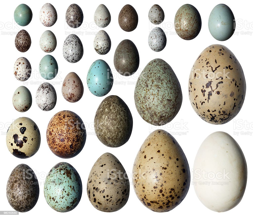 Collection of the bird's eggs. stock photo