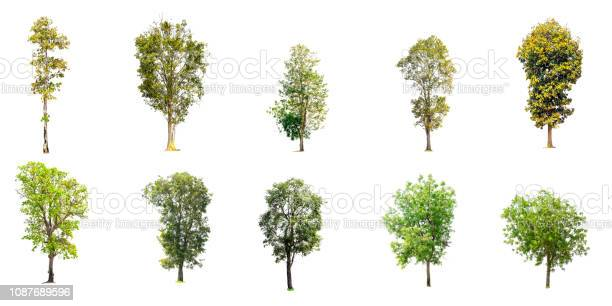 Photo of Collection of trees isolated