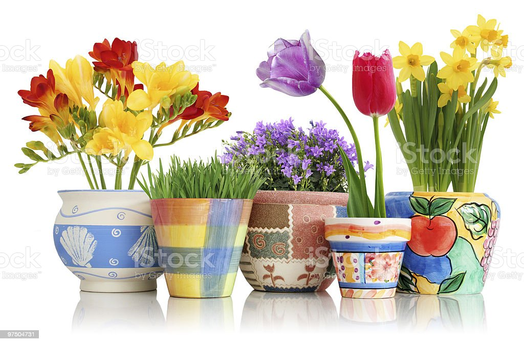 Collection of varied flower pots containing spring flowers stock photo