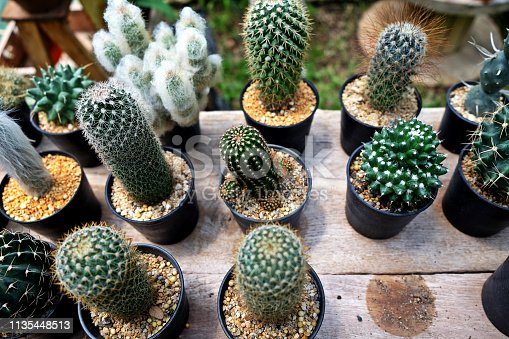 Collection of various cactus and succulent plants in different pots. Potted cactus house plants
