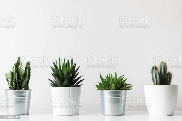 Photo of Collection of various cactus and succulent plants in different pots. Potted cactus house plants on white shelf against white wall.
