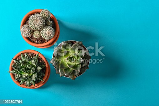 Collection of various cactus and succulent plants in different pots. Potted cactus house plants on blue background, top view