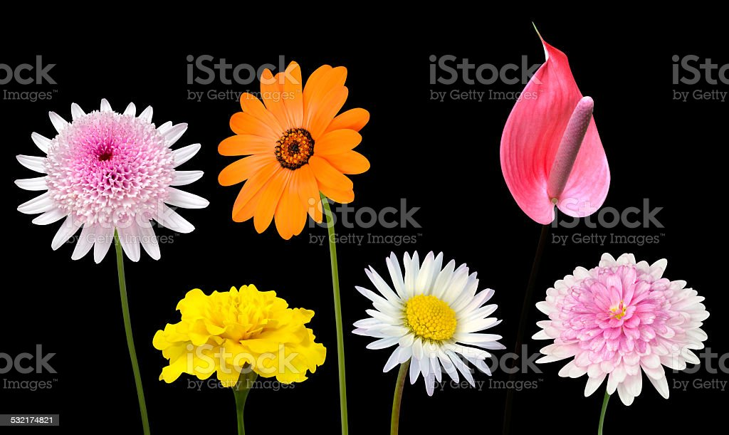 Collection of Various Colorful Flowers Isolated on Black stock photo