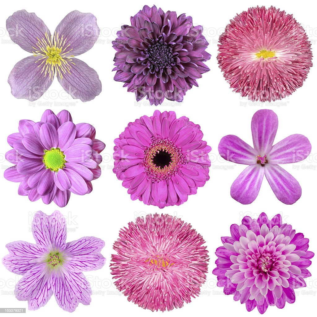 Collection of Various Pink, Purple, Red Flowers Isolated royalty-free stock photo