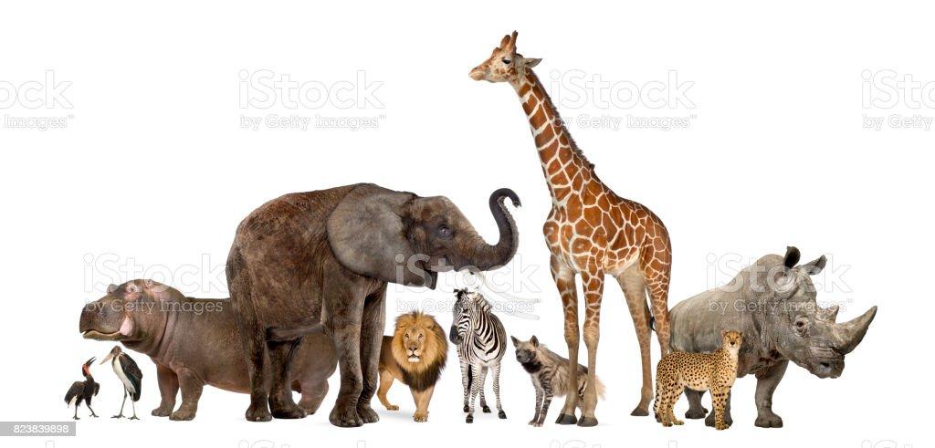 Colección de animales de vida silvestre, aislado en blanco - foto de stock