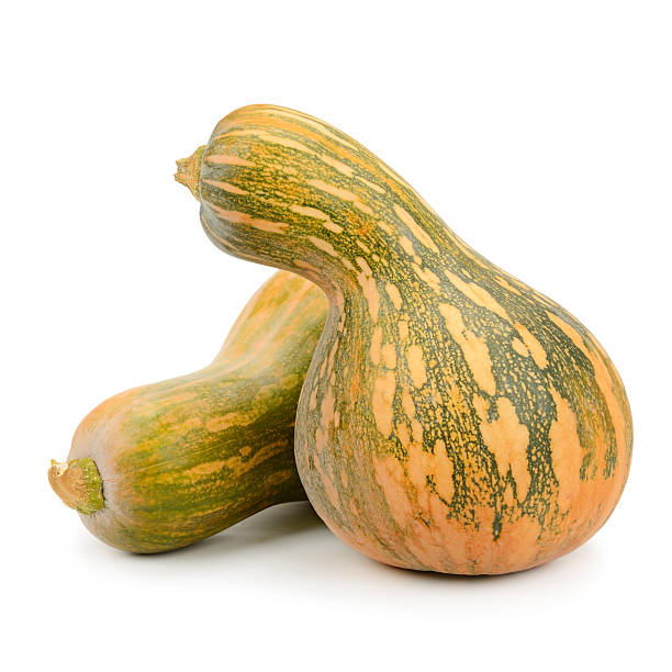 collection pumpkin isolated on white - gourd stock photos and pictures