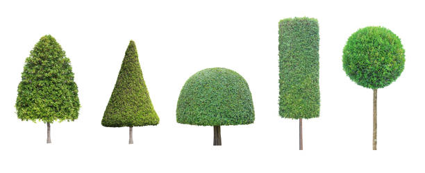 collection set of different shape of topiary tree isolated on white background for formal japanese and english style artistic design garden - bush stock pictures, royalty-free photos & images