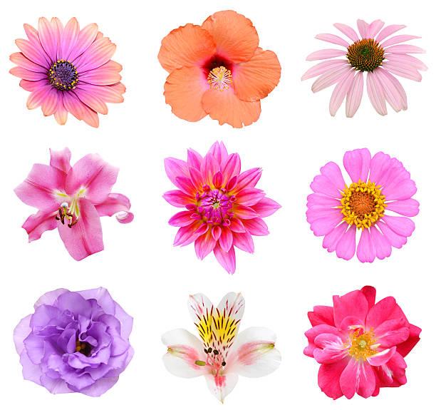 Collection set of flower heads picture id520913679?b=1&k=6&m=520913679&s=612x612&w=0&h=qulx0rcoo8wjqhzrr b780zo4xhxijsilojujdlch2c=