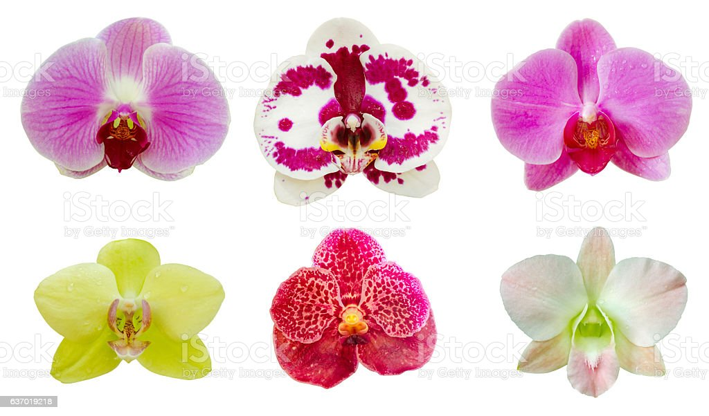 Collection set of orchid flower on white isolated background stock photo