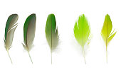 Collection soft feather on white background