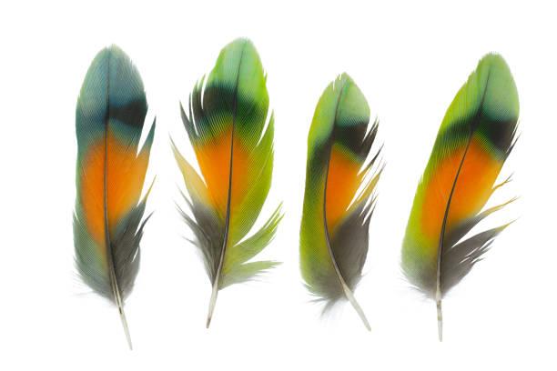collection soft feather on white background - piume colorate foto e immagini stock