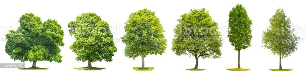 Bäume Ahorn Eiche Birke Kastanien isolierte Natur Sammlungsobjekte - Lizenzfrei Ahorn Stock-Foto