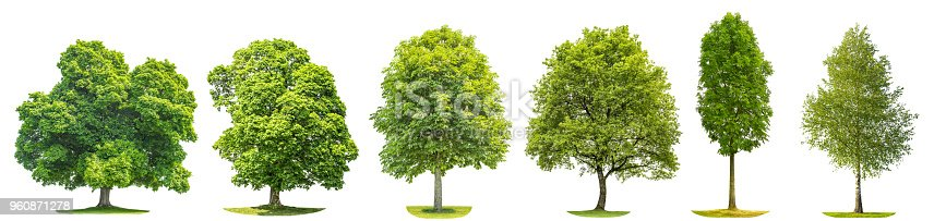 Collection green trees oak, maple, birch, chestnut. Nature objects isolated on white background