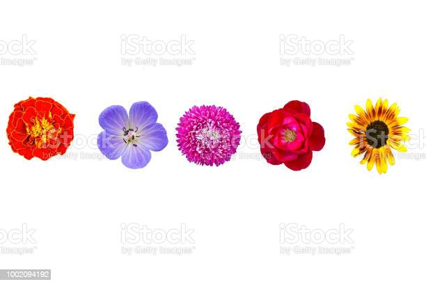 Collection wild and garden flowers isolated on white top view picture id1002094192?b=1&k=6&m=1002094192&s=612x612&h=uh8vqfan5v5kxx7y9qbgu wl 9roehabpjeojwbna50=