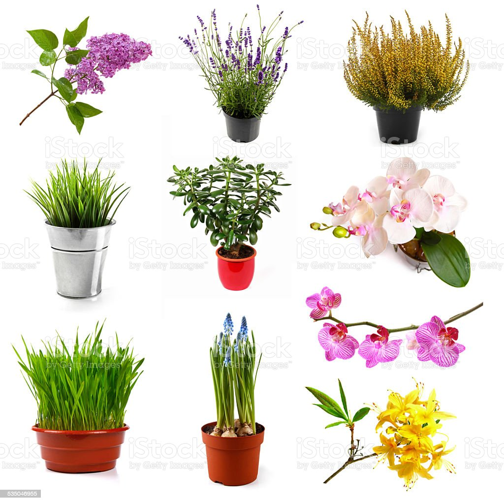 collection with different flowers and plants, isolated on white stock photo