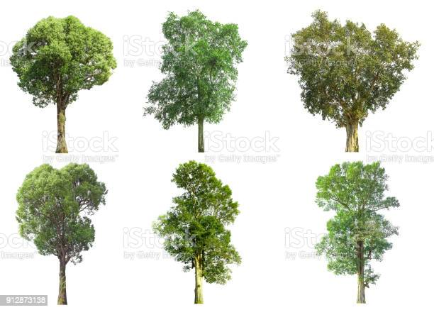 Collections green tree isolated green tree isolated on white picture id912873138?b=1&k=6&m=912873138&s=612x612&h=ryni m1gzo1kof9 mx2u4ipqjapdpvwrbtwr2zvbw4s=