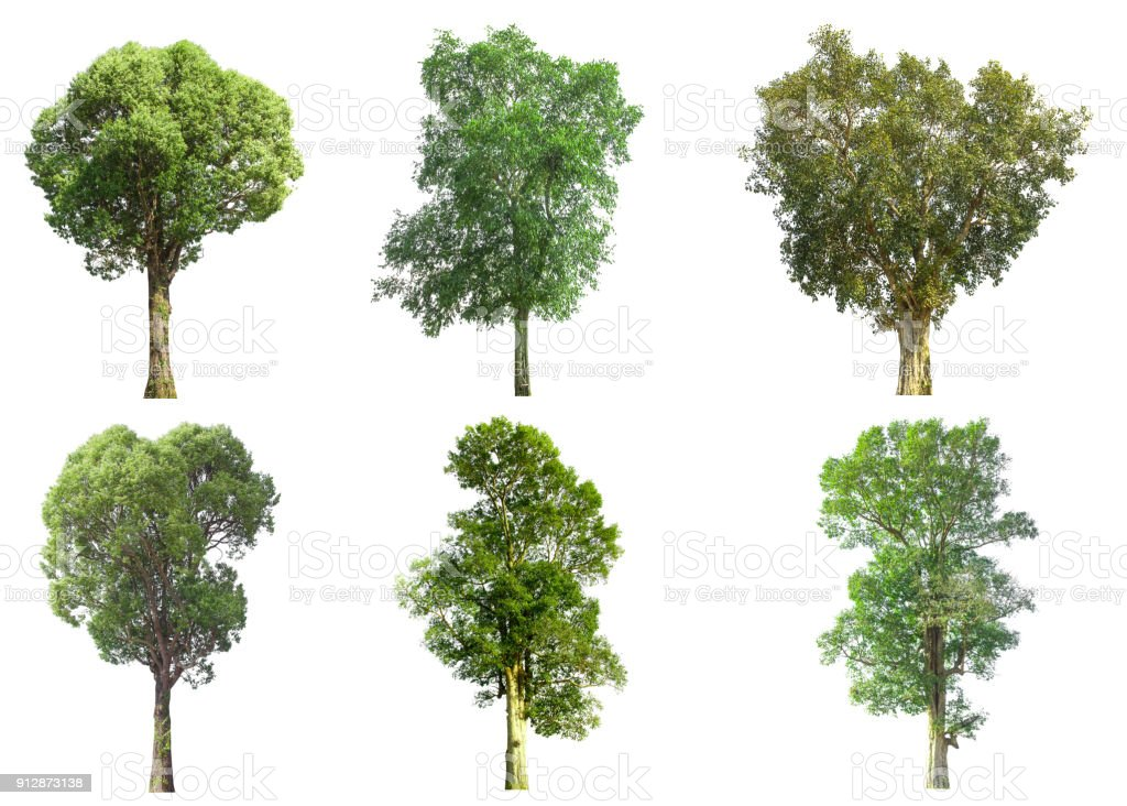 collections green tree isolated. green tree  isolated on white background. - foto stock