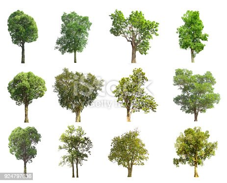 istock collections green tree isolated. green tree  isolated on white background. 924797636