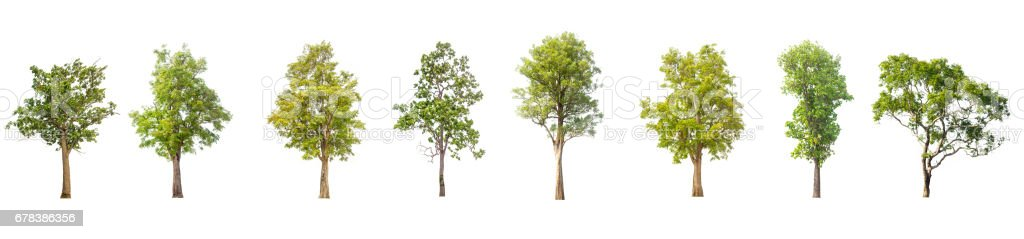 collections green tree isolated on white background. - foto de stock