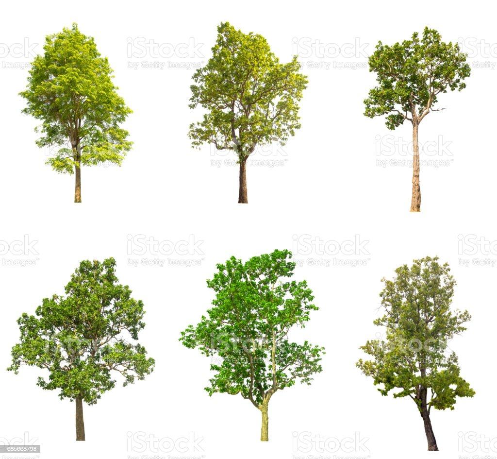 árvore de coleções verde isolado no fundo branco. - foto de acervo