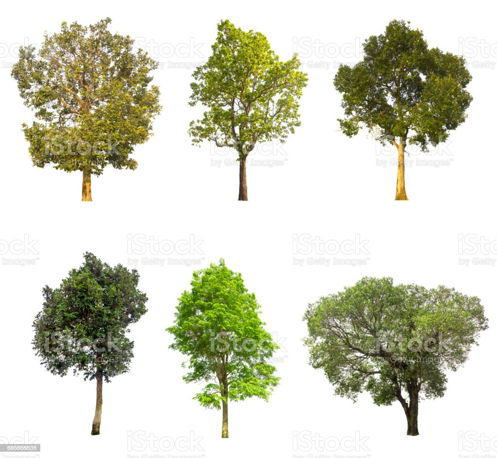 collections green tree isolated on white background. royalty-free 스톡 사진