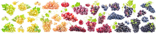 Collections of Ripe grapes with leaves isolated on white Collections of Ripe grapes with leaves isolated on white merlot grape stock pictures, royalty-free photos & images