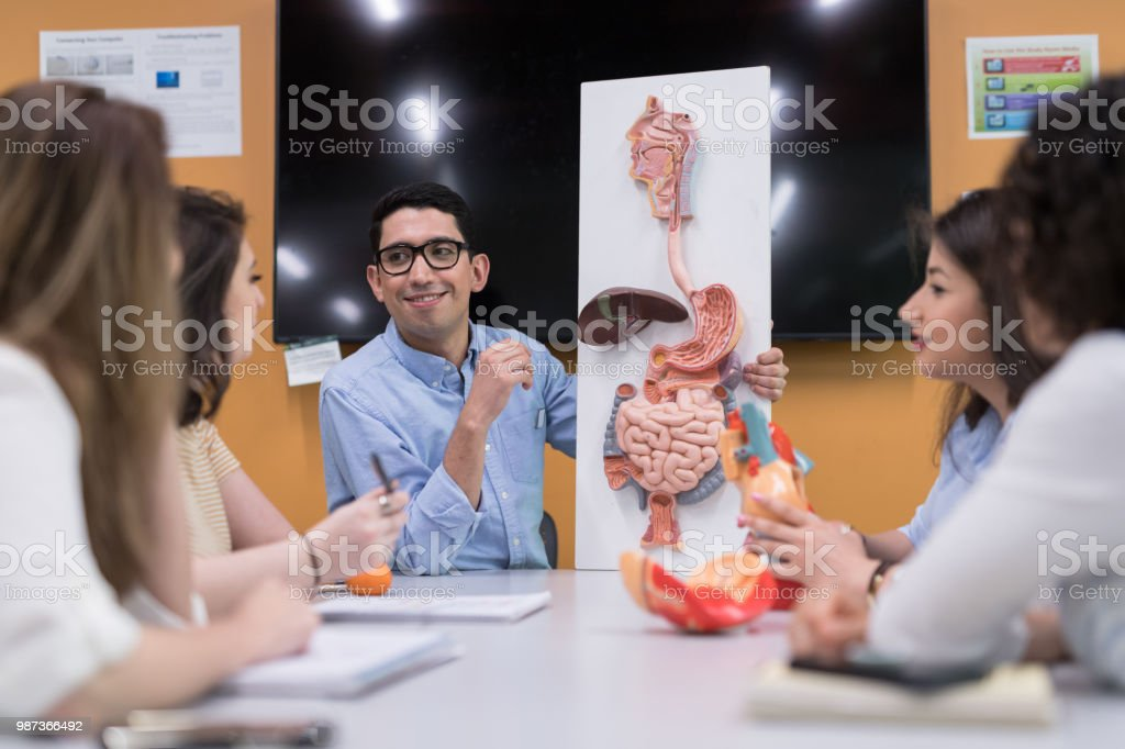 College Anatomy Physiology Study Group Stock Photo