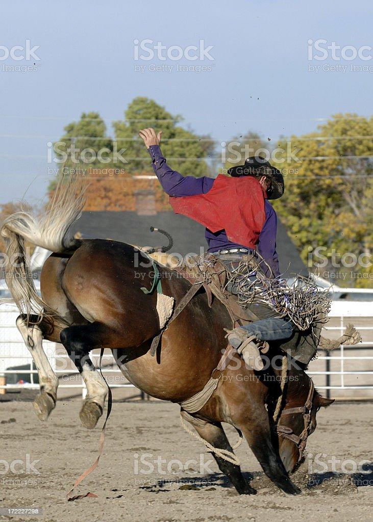 College Rodeo stock photo