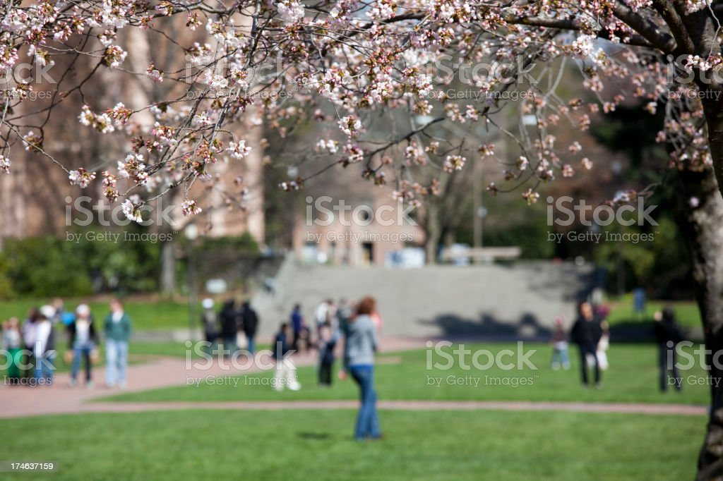College Students on the UW Campus, with cherry blossoms royalty-free stock photo