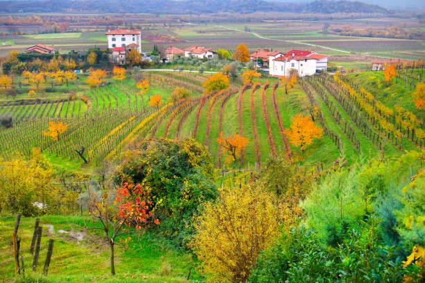 collio wine region, friaul-julisch venetien, italien - friaul julisch venetien stock-fotos und bilder