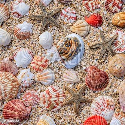 Colofrul shells on the beach, Vietnam