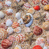 Colofrul shells on the beach, Vietnam