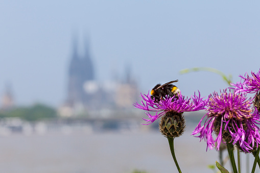 Cologne Cathedral Germany In Summertime Stock Photo - Download Image Now