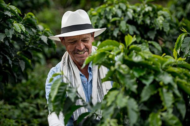 colombian coffee farmer - coffee farmer foto e immagini stock