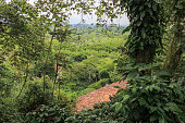 istock Colombian green jungle in zona cafetera, red traditional brick roof party visible in front, south america, colombia 1303289323
