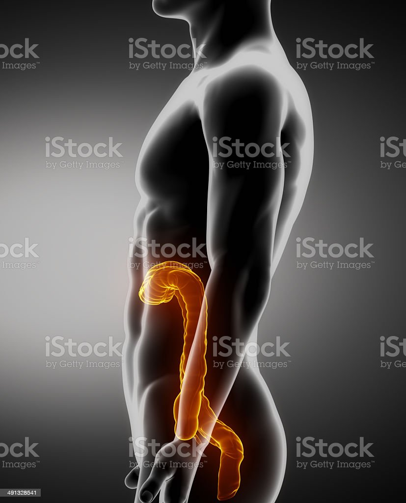 Colon Male Anatomy Lateral Xray View Stock Photo More Pictures Of