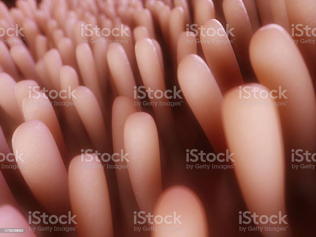 colon villi stock photo