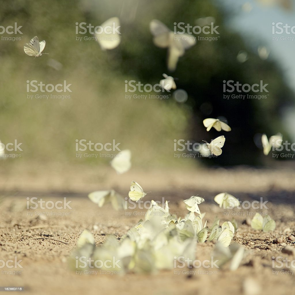 Colony of Butterflies royalty-free stock photo