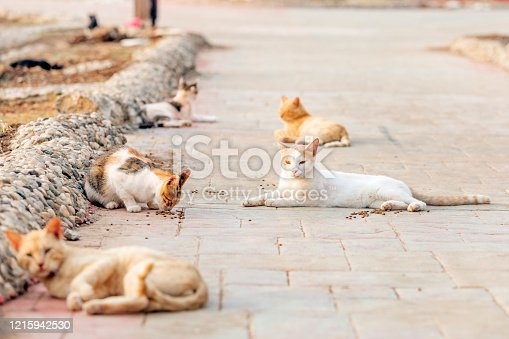 A colony of feral, stray or alley cats. Feral cats often live in groups called colonies, which are located close to food sources and shelter. Some colonies are organized in more complex structures.