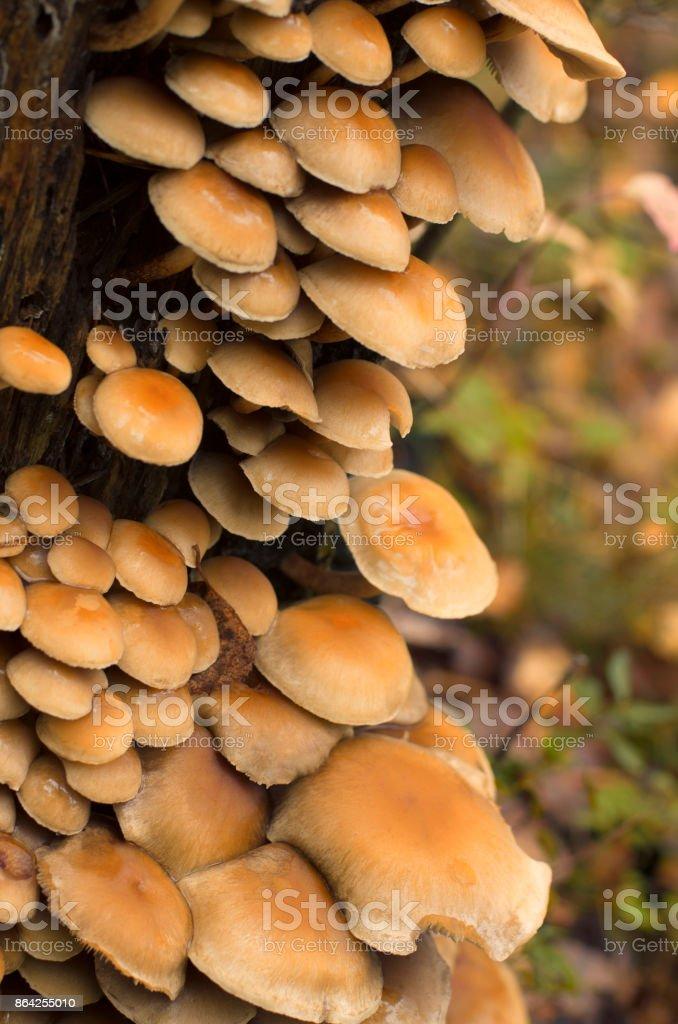 Colony of fungi on a tree trunk royalty-free stock photo