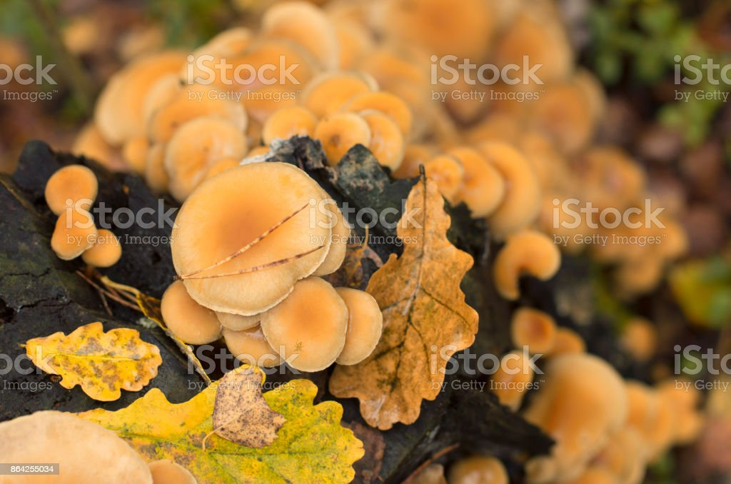 Colony of fungi on a tree trunk with fallen leaves royalty-free stock photo