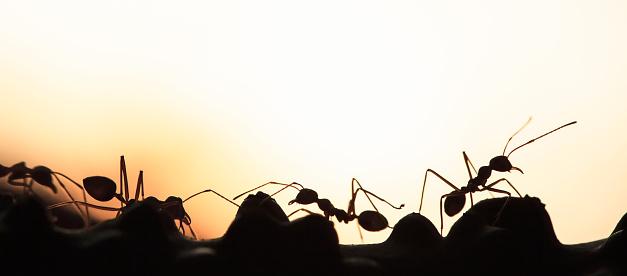 Een Kolonie Van Groene Mieren Met Een Gesprek Op Een Wijnstok Stockfoto en meer beelden van Abstract