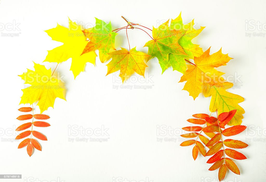 color autumn leaves on a white background stock photo